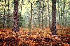 Foto del bosque del otoño Imagen de archivo libre de regalías