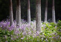 Foto del bosque en la primavera Foto de archivo