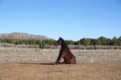 Foto del cavallo Fotografia Stock Libera da Diritti