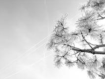 Foto del cielo y del árbol Fotografía de archivo