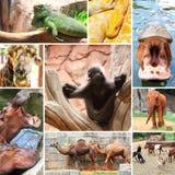 Foto del collage del giardino zoologico di alcuni animali selvatici Fotografia Stock