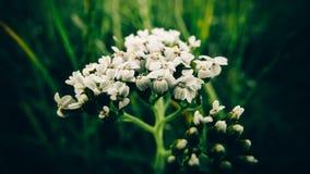 Foto del color verde del verano macro de las flores Fotografía de archivo