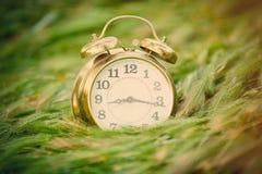 Foto del despertador fresco en el backgroun maravilloso del campo de trigo imagen de archivo libre de regalías