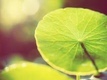 Foto del estilo del vintage de hojas frescas y verdes con los fondos abstractos del bokeh y de la luz del sol Fotos de archivo