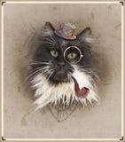 Foto del estilo del vintage del gato vestido foto de archivo