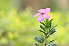 foto del fiore della natura fotografia stock