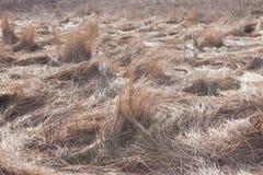 Foto del fondo de la hierba gris seca en un campo, modelo del año pasado Foto de archivo libre de regalías