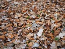 Foto del fondo de la hoja, escarcha, nieve en las hojas fotografía de archivo libre de regalías