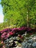 Foto del fondo del paisaje de la primavera de un parque ornamental floreciente Fotos de archivo