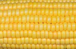 Foto del fondo giallo del cereale, ambiti di provenienza astratti, Immagine Stock Libera da Diritti