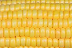 Foto del fondo giallo del cereale, ambiti di provenienza astratti, Fotografia Stock