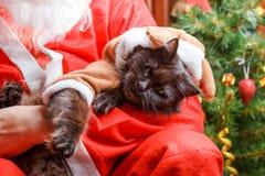 Foto del gato negro del ` s del Año Nuevo en traje de los ciervos Fotografía de archivo
