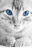 Foto del gattino del gatto - innocenza fotografia stock libera da diritti