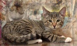 Foto del gattino nel retro stile Fotografie Stock Libere da Diritti