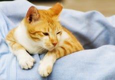 Foto del gatto - allarme Immagini Stock Libere da Diritti