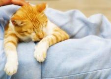 Foto del gatto - distenda Fotografia Stock Libera da Diritti
