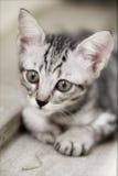Foto del gatto - giocherete con me? Immagine Stock