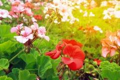 Foto del giardino di fiori nel giorno soleggiato fotografie stock