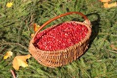 Foto del mirtillo rosso: Giorno di ringraziamento - foto di riserva Immagini Stock Libere da Diritti