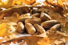 Foto del otoño Imagenes de archivo