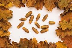 Foto del otoño Imágenes de archivo libres de regalías