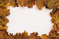 Foto del otoño Fotos de archivo libres de regalías