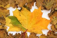 Foto del otoño Imagen de archivo libre de regalías