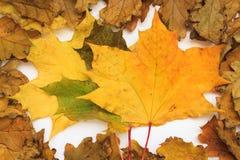 Foto del otoño Foto de archivo libre de regalías