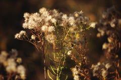 Foto del otoño de los picores agradables de las plantas Foto de archivo