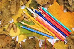 Foto del otoño Lápices, bellotas y hojas del arce y del roble fotografía de archivo libre de regalías