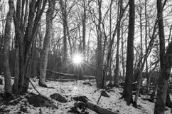 Foto del paesaggio e della natura in bianco e nero Fotografia Stock Libera da Diritti