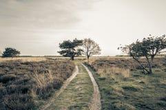 Foto del paesaggio nei Paesi Bassi Fotografia Stock Libera da Diritti