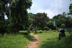Foto del paesaggio del parco naturale immagine stock