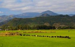 Foto del paisaje de hermoso imagen de archivo