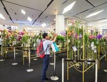 foto del paraíso de la orquídea de Bangkok del modelo tomada el 26 de noviembre de 2014 Foto de archivo libre de regalías