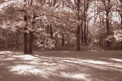 Foto del parque Foto de archivo