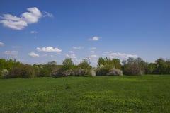 Foto del parque de la primavera Fotos de archivo