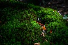 Foto del prato verde muscoso nella foresta di autunno con luce solare fotografia stock