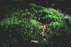 Foto del prato verde muscoso nella foresta di autunno con luce solare fotografie stock libere da diritti