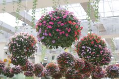 Foto del primer de colgar las flores florecientes hermosas imagen de archivo