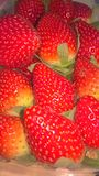 Foto del primer de fresas imagenes de archivo