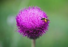 Foto del primer de la flor púrpura Fotos de archivo libres de regalías