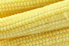 Foto del primer del maíz de bebé (maíz de la vela) Foto de archivo