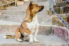 Foto del primo piano del cane che sta sembrando assente mindedly fotografia stock libera da diritti