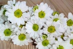 Foto del primo piano dei fiori bianchi fotografie stock
