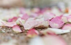Foto del primo piano dei petali rosa sul modo all'altare di nozze Immagini Stock