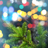 Foto del primo piano del ramo di albero dell'abete con le luci variopinte Fotografia Stock