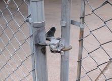 Foto del primo piano del recinto del collegamento a catena Fotografie Stock Libere da Diritti