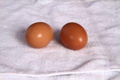 Foto del primo piano dell'uovo Immagini Stock