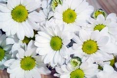 Foto del primo piano di bei fiori bianchi fotografie stock